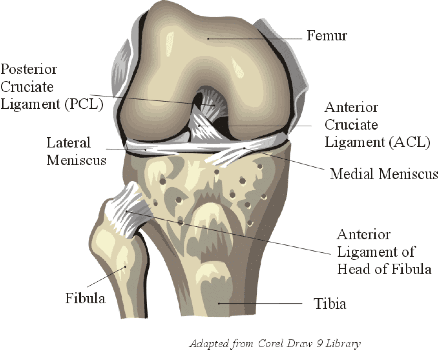 Knee Ligament Injuries with Skiing - Precision Athletica
